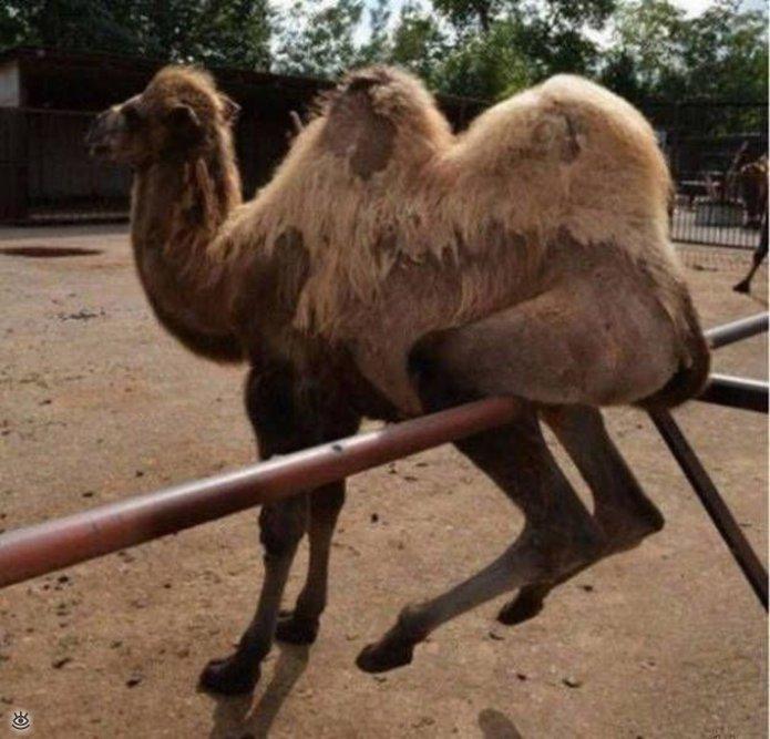 Я паркуюсь как верблюд